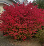 Autumn's way . 15