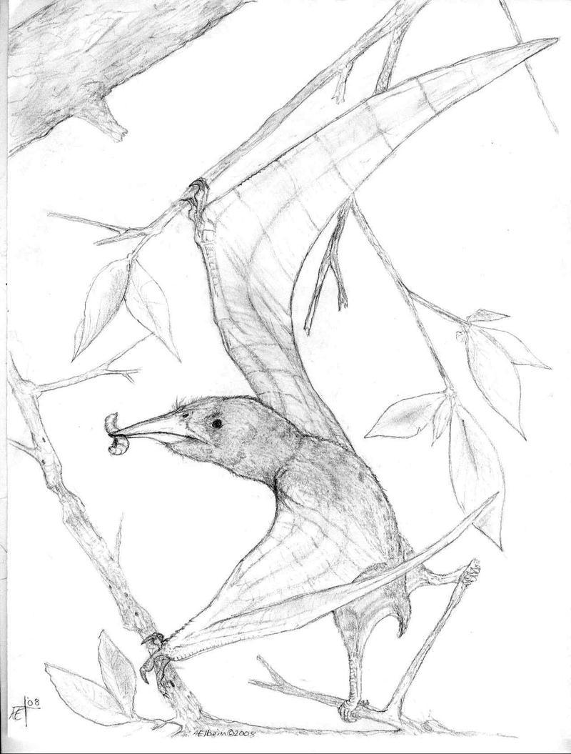 Nemicolopterus crypticus
