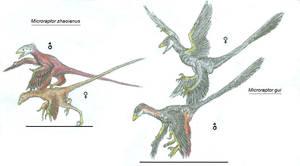 Microraptosauria
