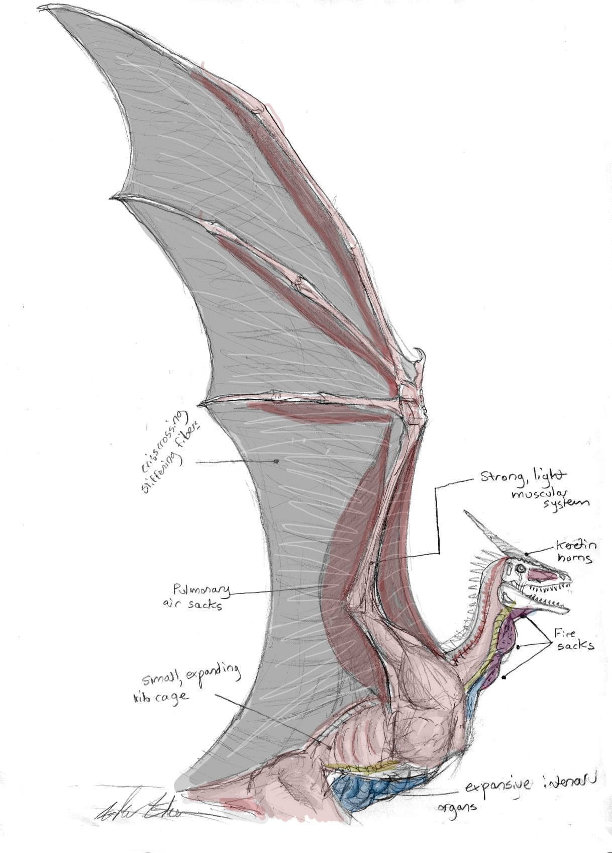 Dragon Wing and Chest Anatomy by Ashere on DeviantArt