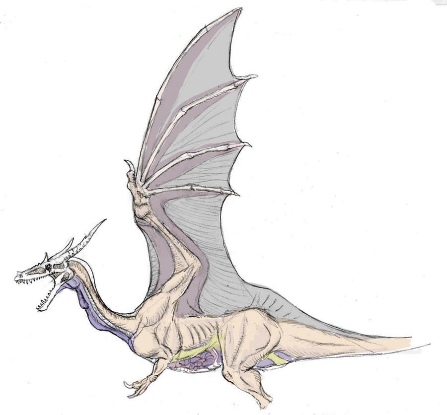 dragon wings folded forward - Google Search | Creatures | Pinterest ...