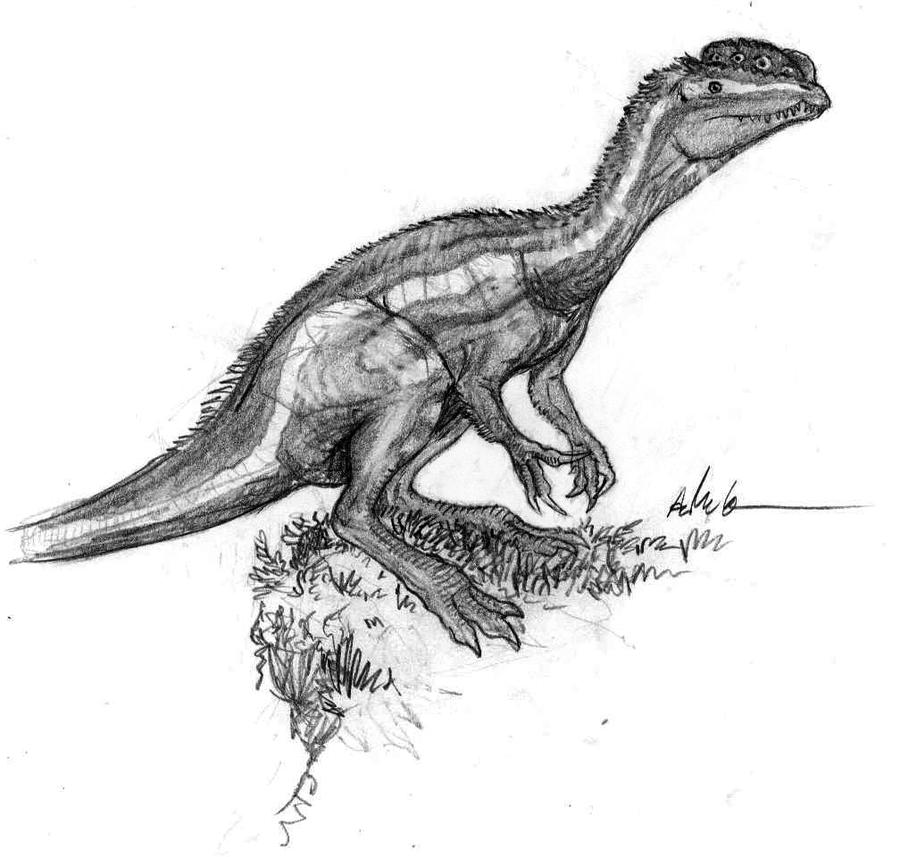 Dilophosaurus sketch by AshereDilophosaurus Drawing