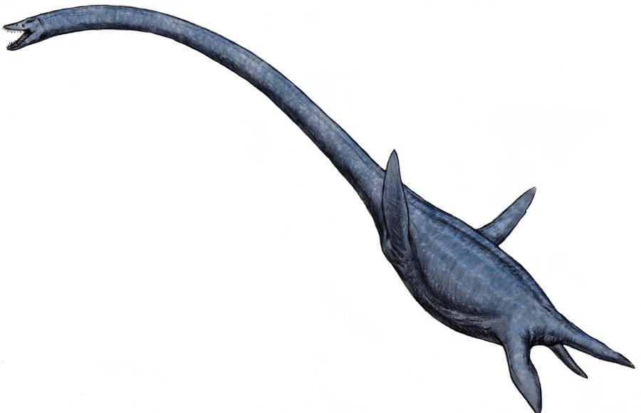 Elasmosaurus sp. by Ashere