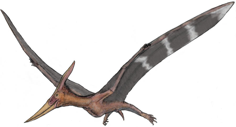pteranodon by ashere on deviantart