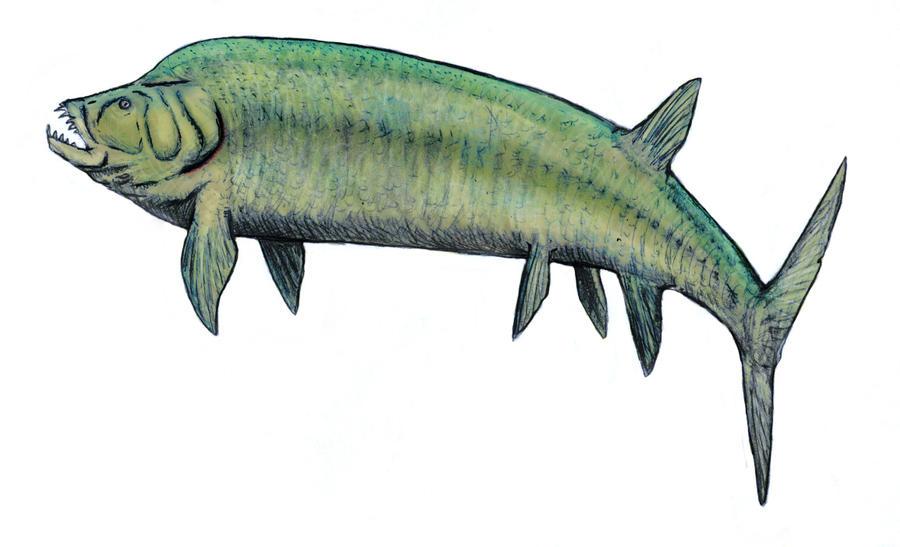 Xiphactinus