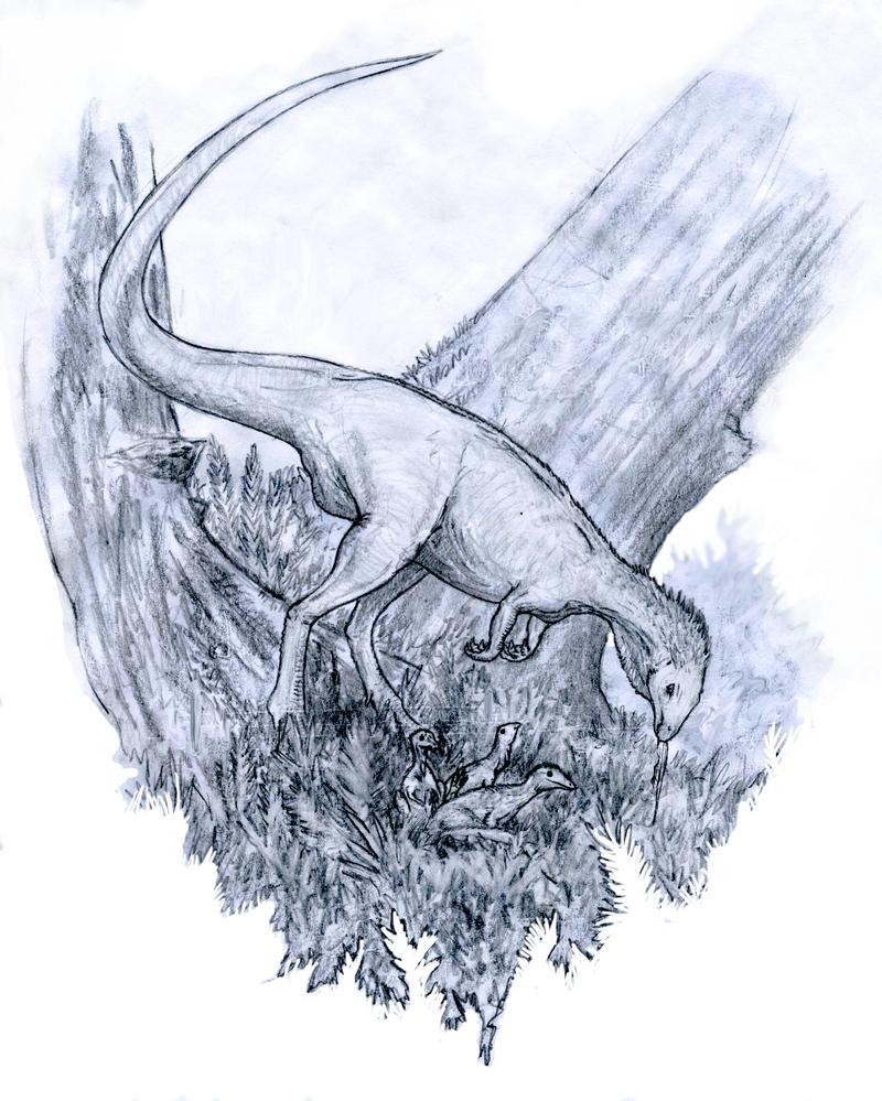 Nest Parasitism by Ashere