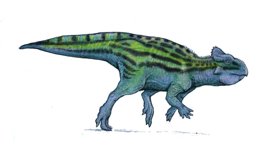 Ceratopsian by Ashere
