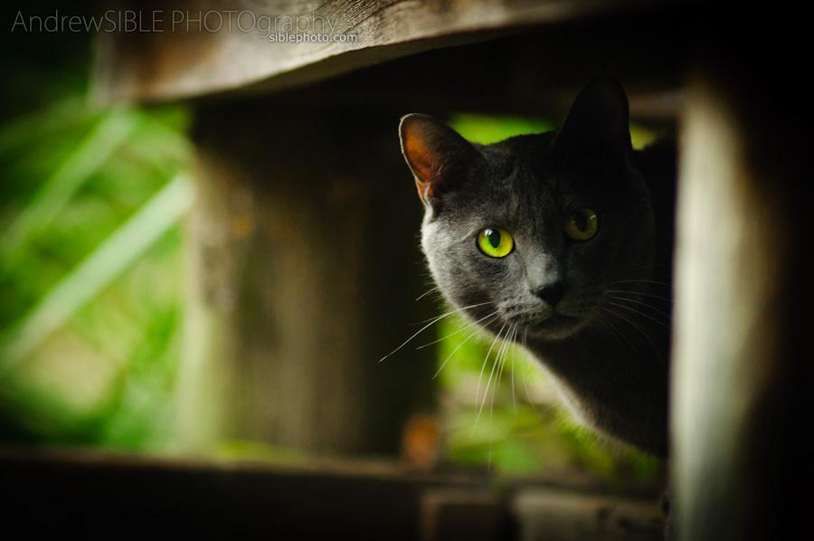 Cautious Friend by Figit090