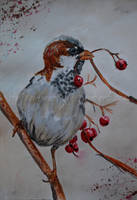 sparrow by strigoi-mort