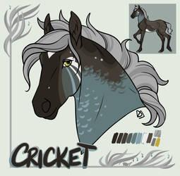 SS Cricket Song