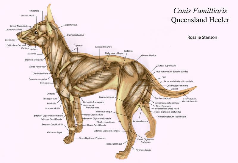 Dog Dna Study Reveals The Extraordinary Journey Of Mans Best Friend