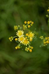 yellowgreen by BrickstonePictures