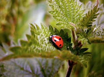 Ladybug by FiaDahl