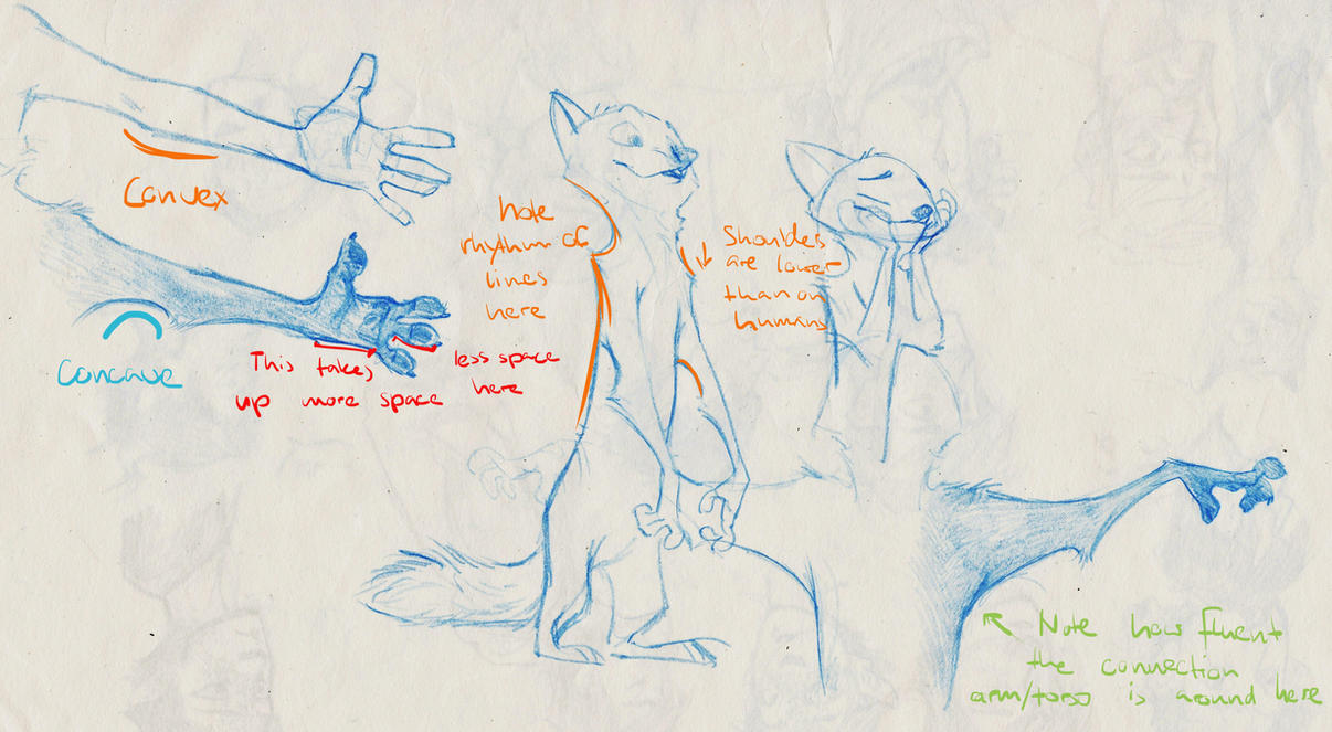 Tips for Drawing Zootopian Anthropomorphic Anatomy by MonoFlax on ...