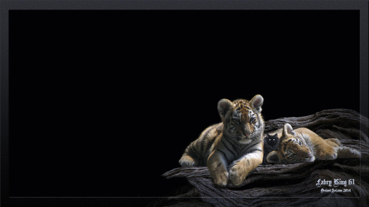 Siberian Tiger Desktop Animals 1920 x 1080 by FABRYKING61