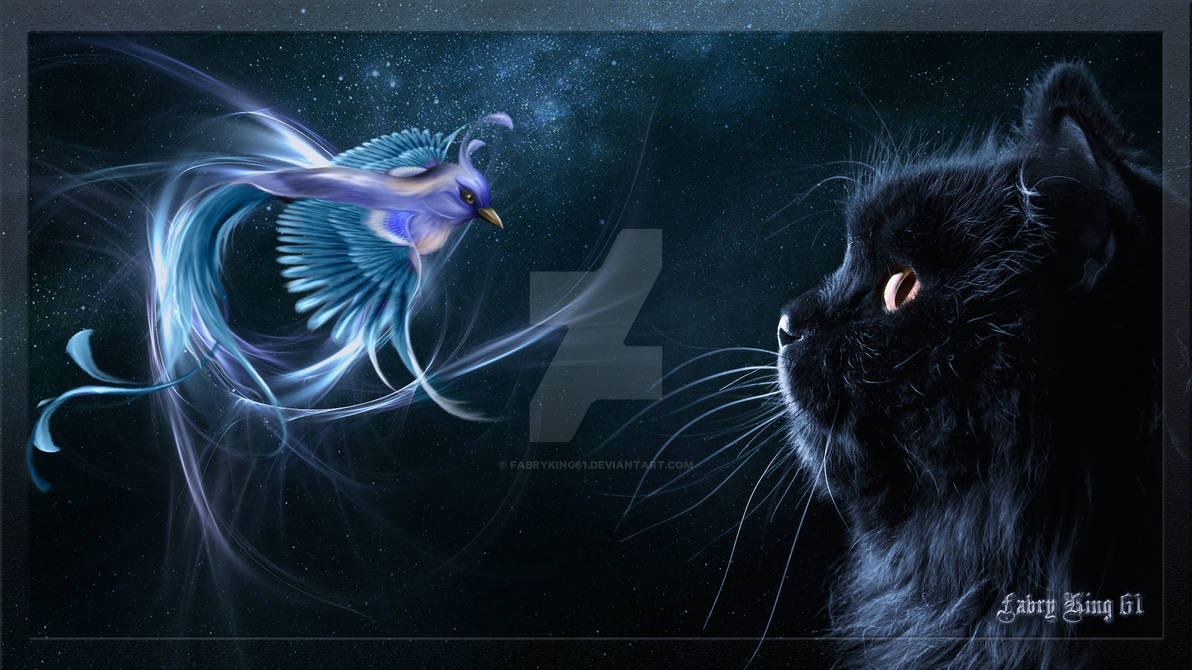 Dreams Fantasy of a Black Cat by FABRYKING61