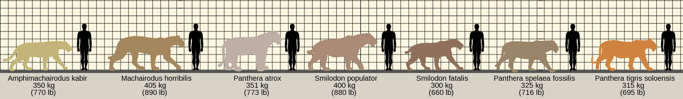 Largest of the Felidae