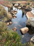 Bog Pool