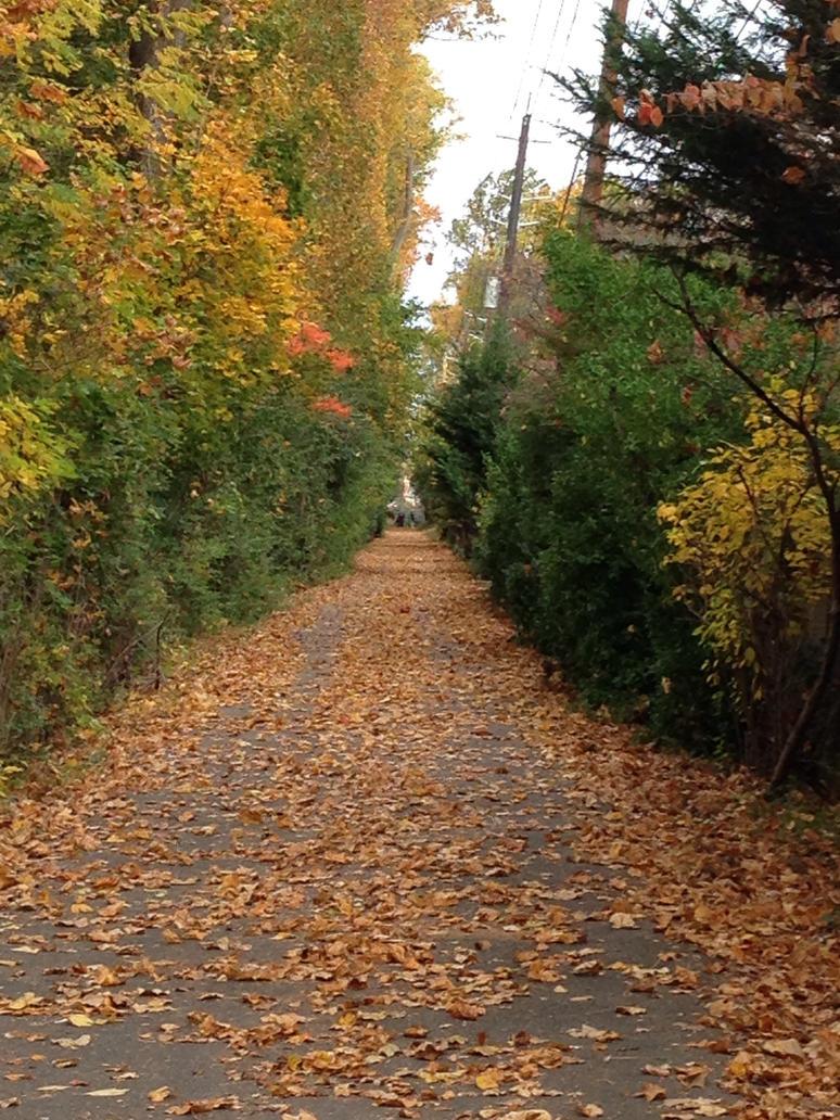 Walk/Bike Path by Cuzzer