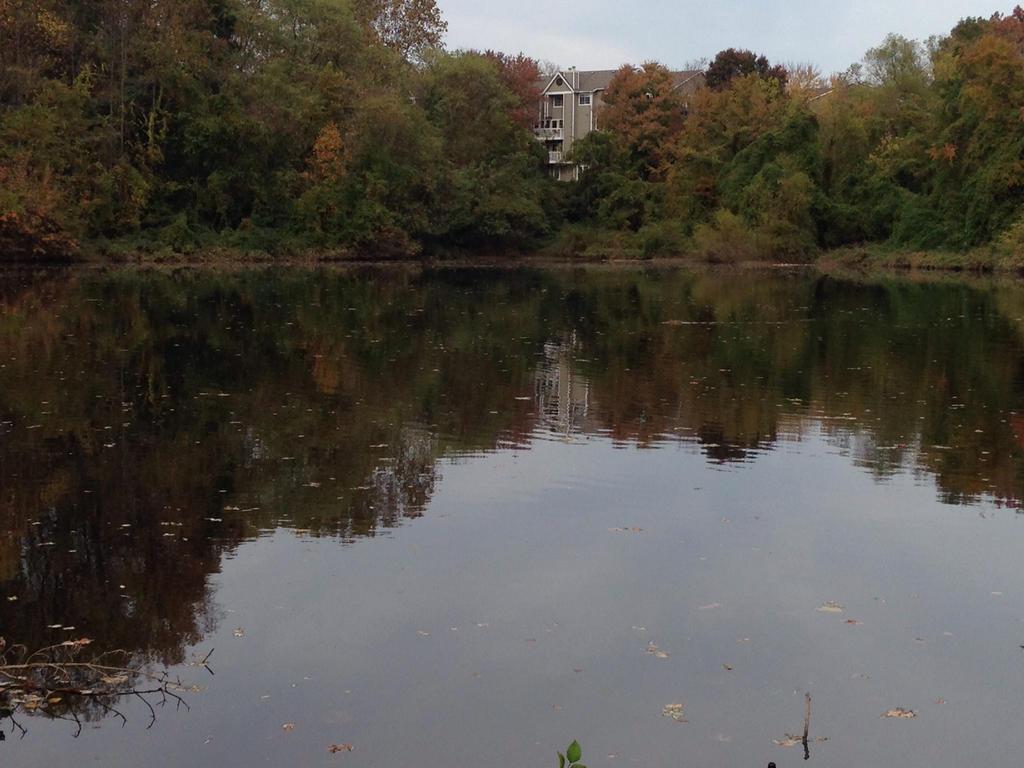 Lake by Cuzzer
