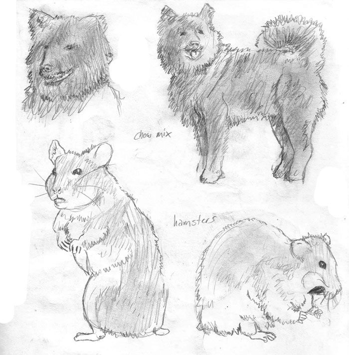 d: Animal Studies 1 :b by nenuiel
