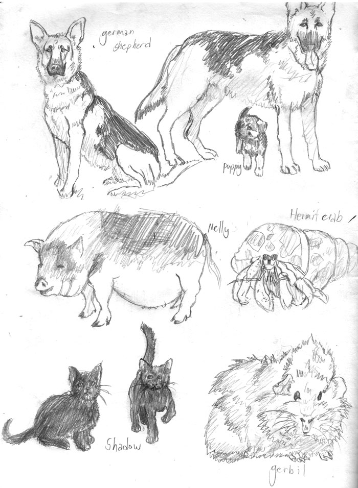 d: Animal Studies 4 :b by nenuiel