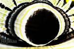 Pokey Eye