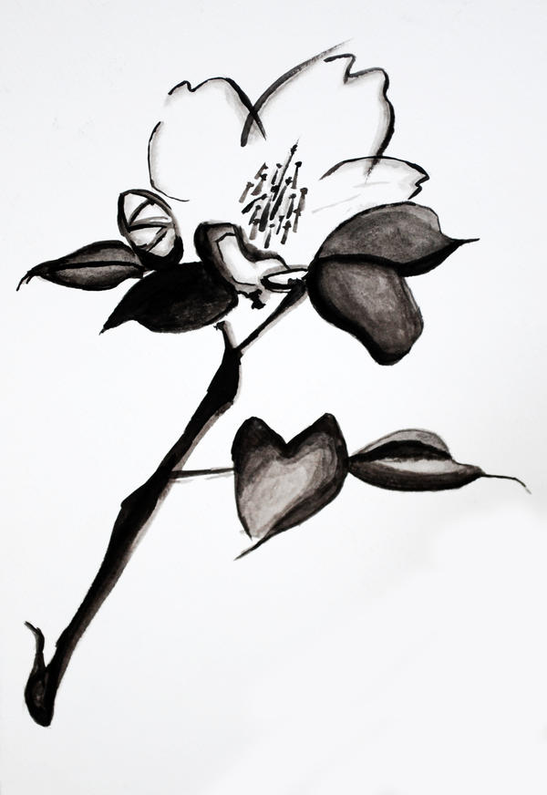 Flower Study in Ink by MoonlitBloo
