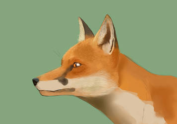 Fox wip by laurencedge