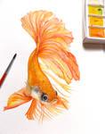 Goldfish, Watercolor