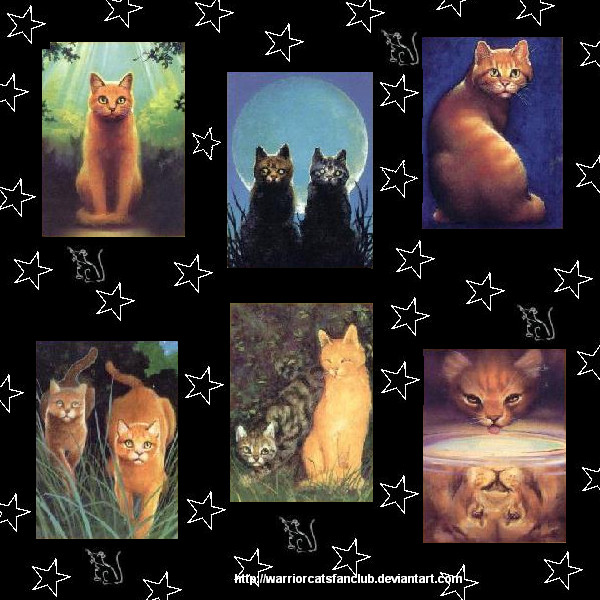 Warriors Cover Collage by WarriorCatsFanClub