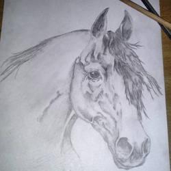 Quarter Horse by piche2