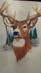Stag drawing by squadra1317