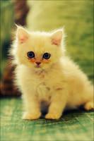 cute cat by SilentPain0