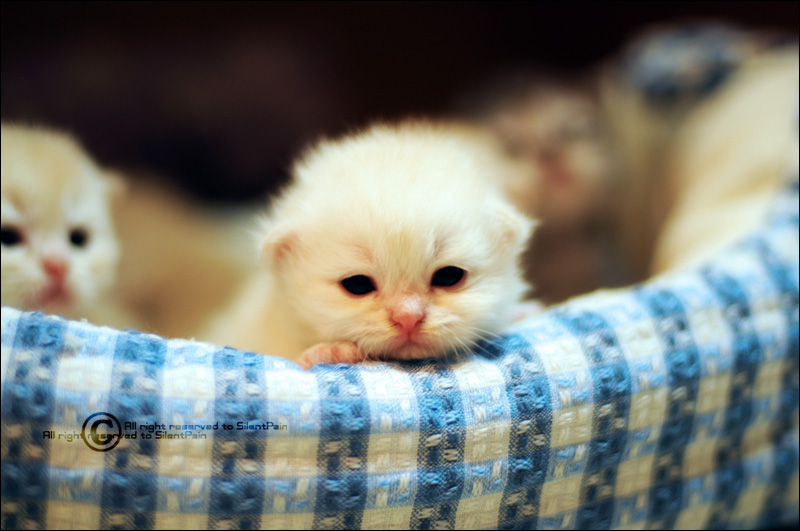 MY_Baby_Kitty_by_SilentPain0.jpg