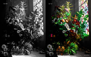 flowers before after by aeli9