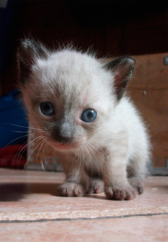 Cute Newborn Cats That Looks Like Oreos
