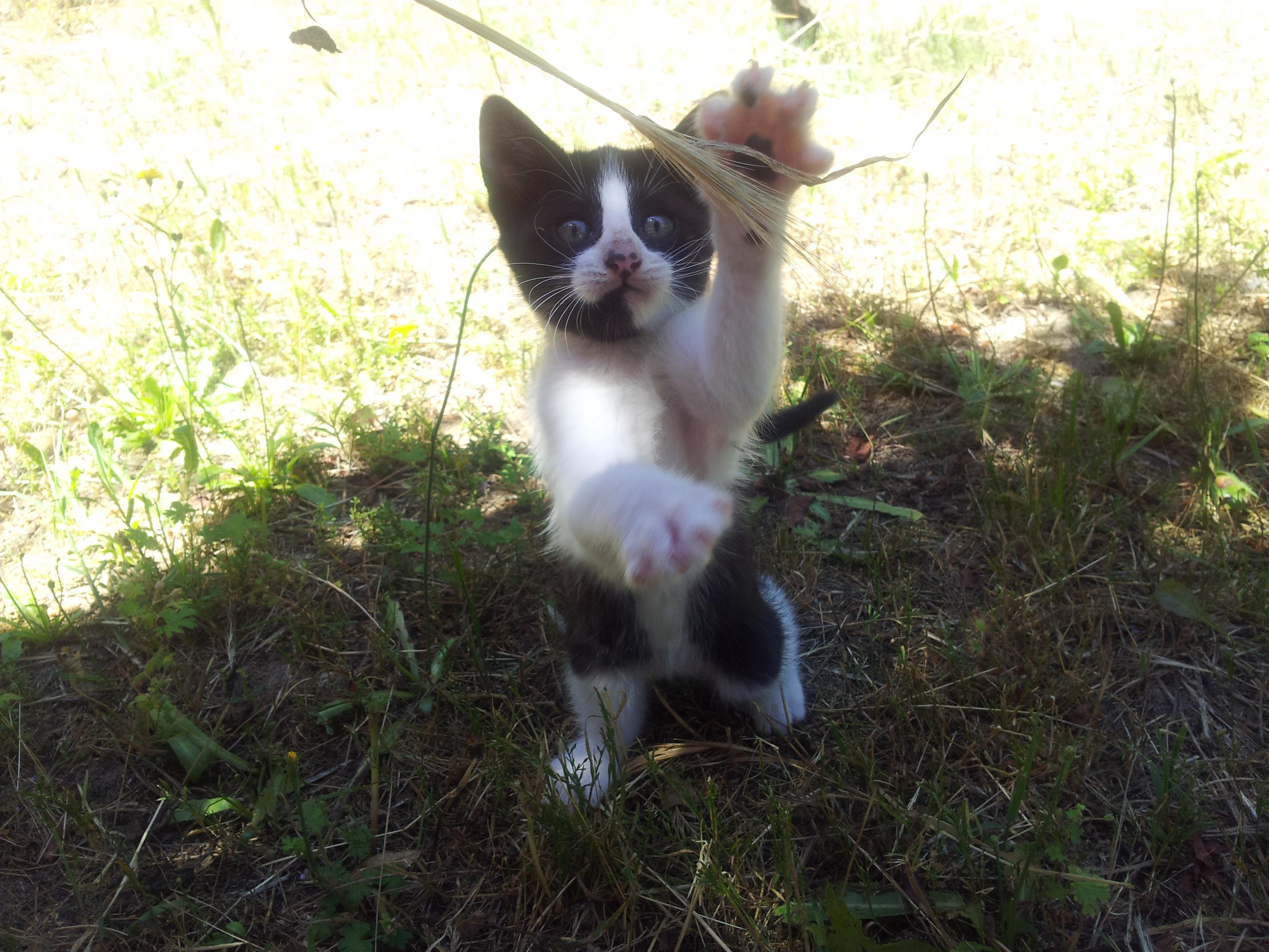 Little kitten (PANDA) by aeli9