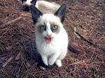 Tristana, the grumpy cat