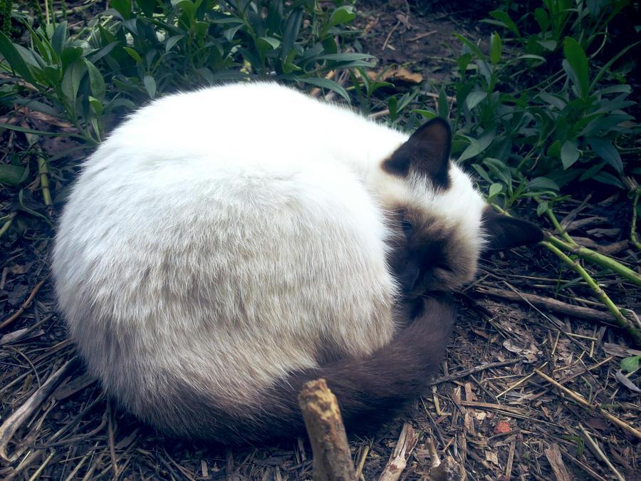 Sleeping cat by aeli9