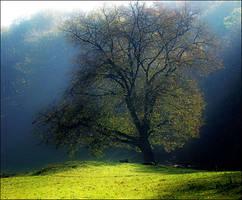 Autumn's light by VictorLEM