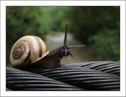 Snail 3 by VictorLEM