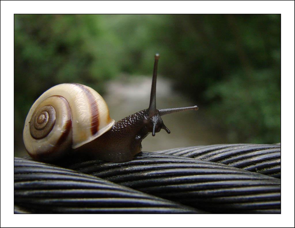 Snail 3 by VictorLEM o...