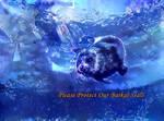 Dream Seal 8/22/17 - Eyes of The Ocean by MatthewandKatlayn