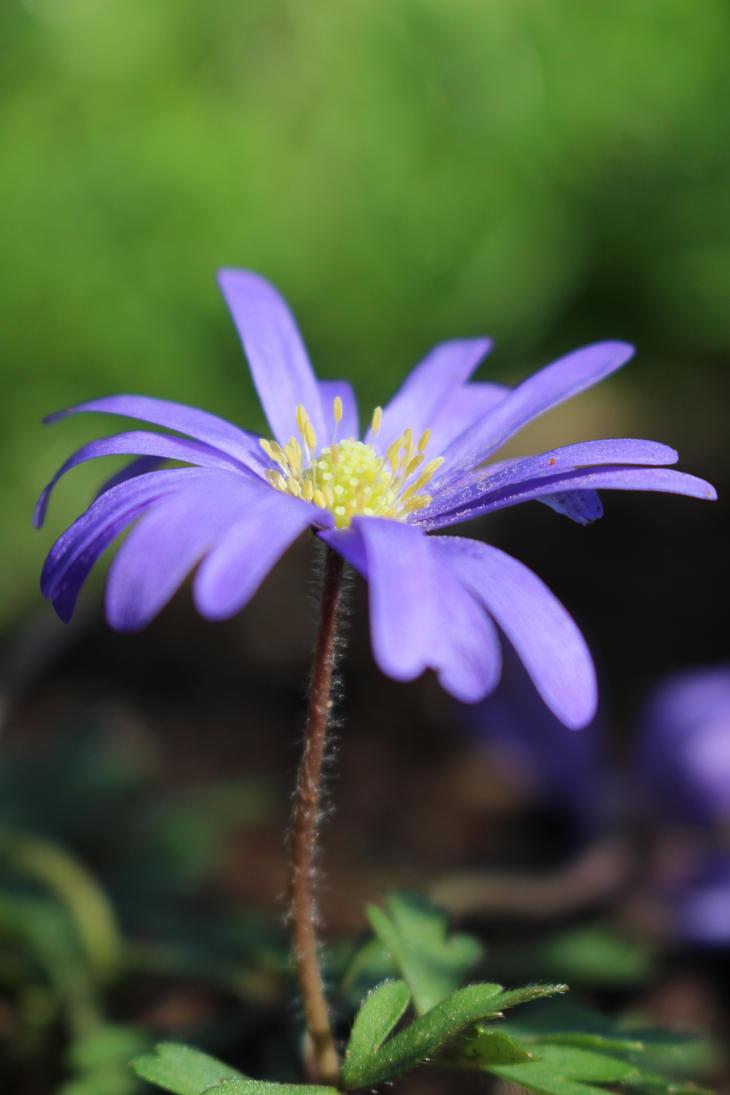 Garden Flower by DanikaMilles