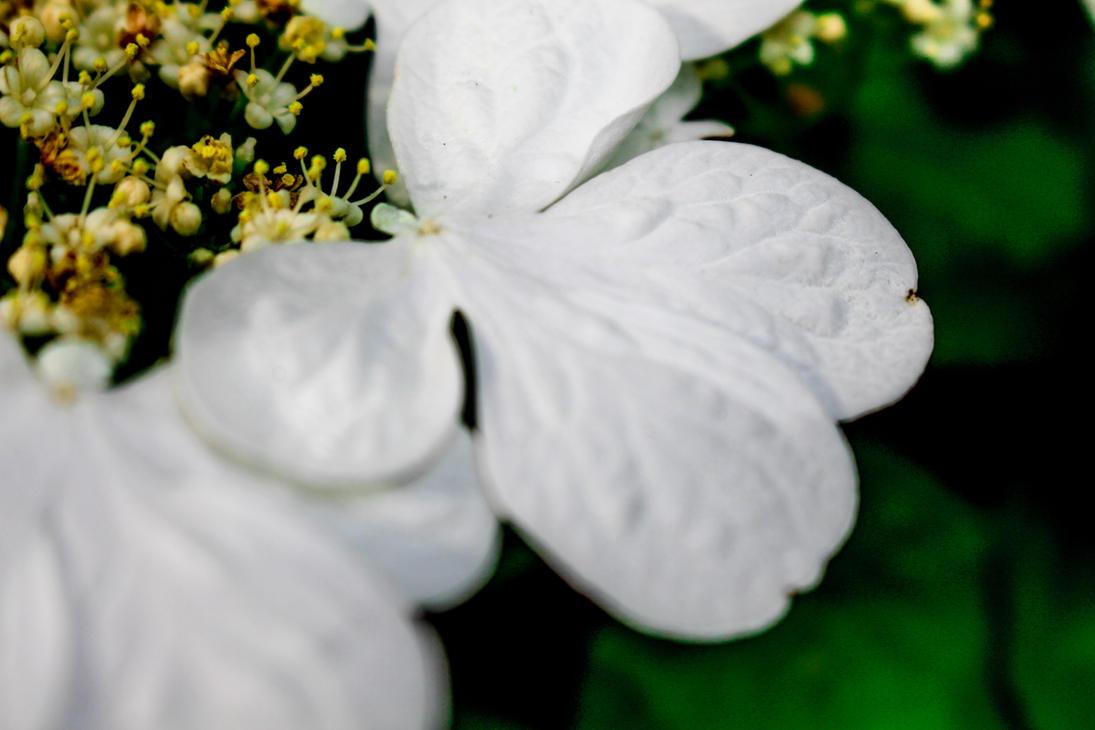 Butterfly Flower by DanikaMilles