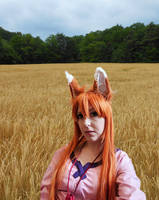 Spice and wolf by DanikaMilles