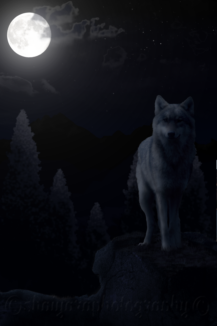 Wolf in the Light of the Moon by Leopardenschweif