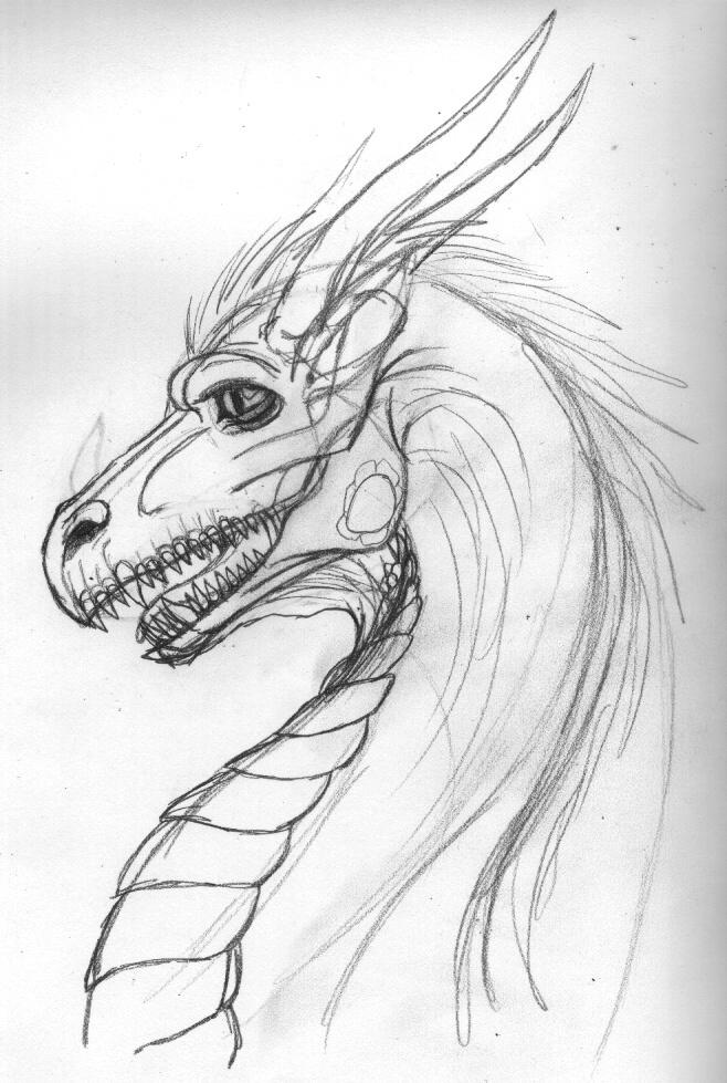 Dragon Head Sketch by keikittora on DeviantArt