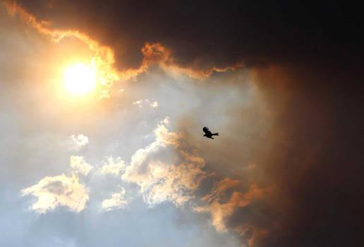 Eagle and the Sun